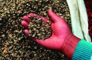 Brasilien ist der größte Kaffeeproduzent der Welt. (Quelle: Christoph Engel)