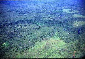 Das riesige Waldgebiet des Amazonas. (Quelle: Christian Wilmsen)