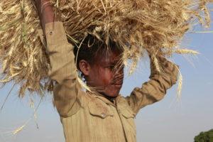 Ein Junge trägt einen Getreideballen auf dem Kopf. (Quelle: Christian Herrmanny)