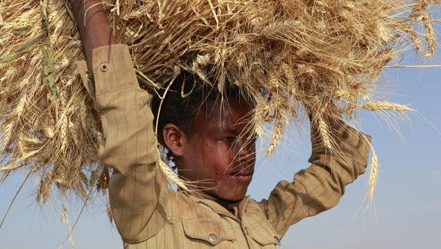 Tafari trägt ein dickes Bündel Getreide auf dem Kopf. (Quelle: Christian Herrmanny)