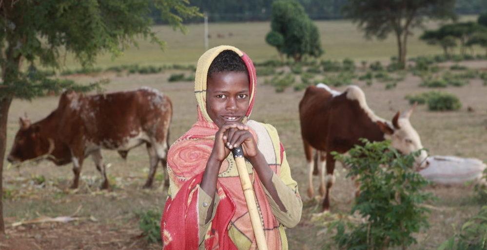 Ein äthiopischer Junge hütet eine Herde Kühe. (Quelle: Christian Herrmanny)