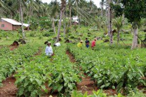 Menschen ernten Gemüse von einem Feld, das sie zusammen mit einem Kindernothilfe-Partner nach dem Taifun Haiyan angelegt haben. (Alexej Getmann)
