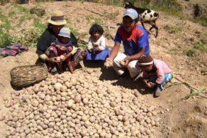 Eine Familie bei der Kartoffelernte. (Quelle: Kindernothilfe-Partner)