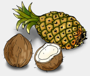 Ananas und Kokosnuss, Illustration (Quelle: Angela Richter)