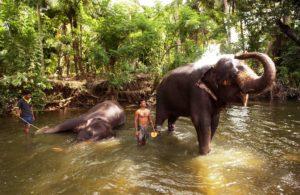 Elefanten nehmen ein Bad in einem Fluss. (Quelle: Jens Großmann)
