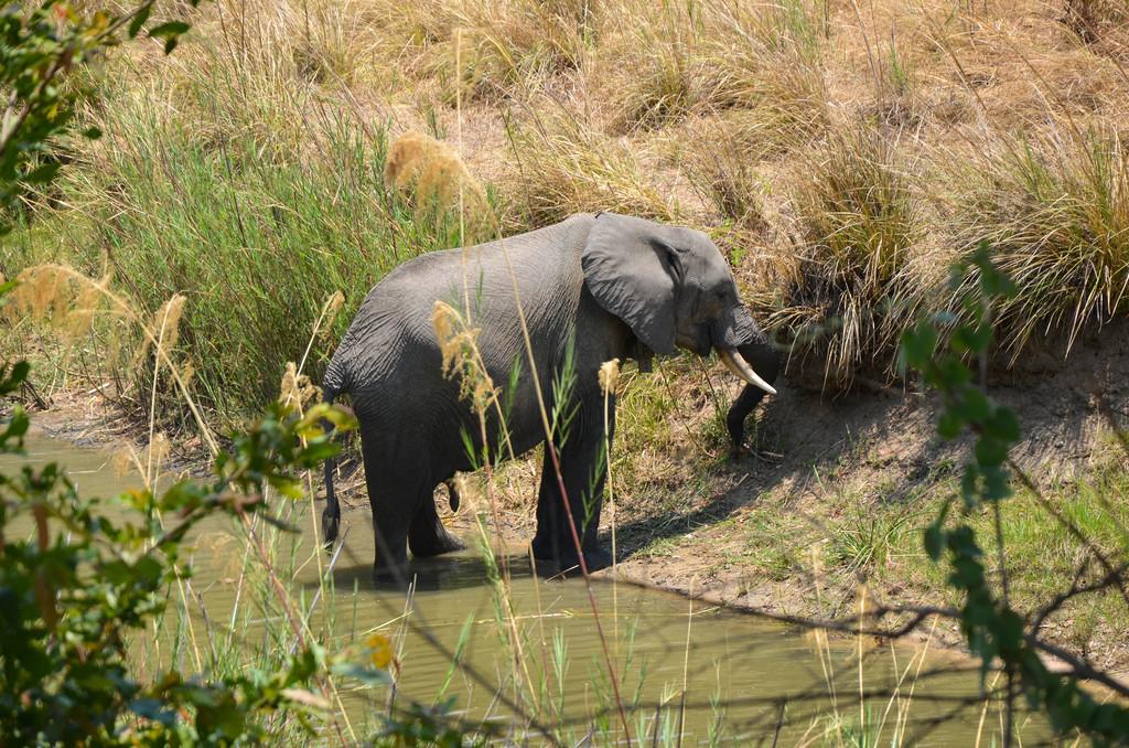 Ein Elefant am Wasserloch. (Quelle: Josephine Vossen)
