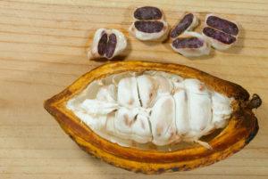 In der Kakaofrucht sitzen die Kakaobohnen. (Quelle: iStock)
