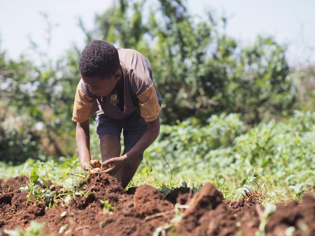 Ein Junge arbeitet auf einem Acker (Quelle: Malte Pfau)