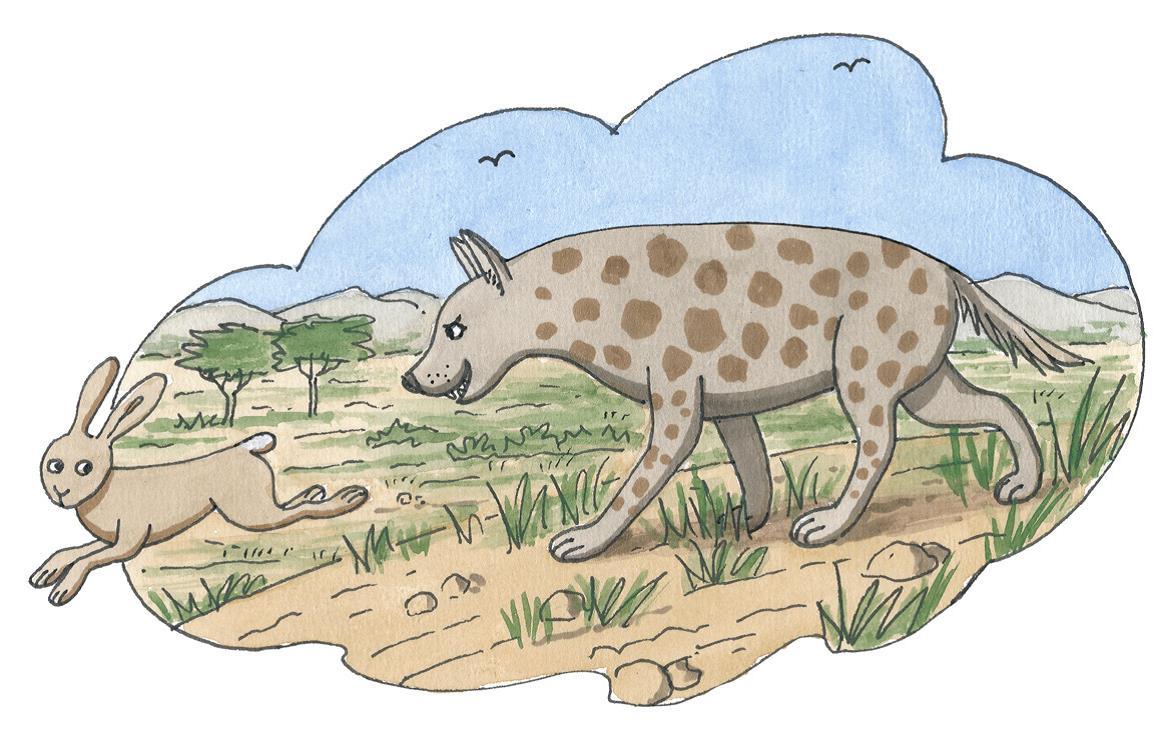 Eine Hase und eine Hyäne laufen durch die Savanne (Quelle: Peter Laux)