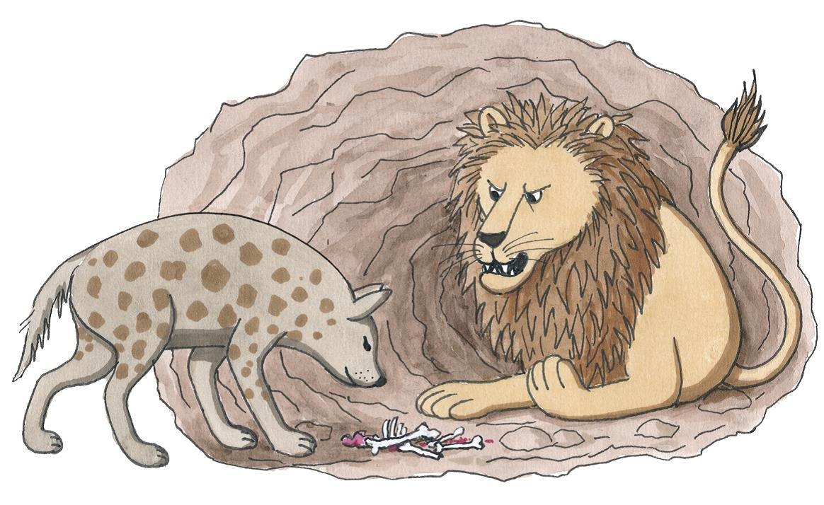 Eine Hyäne besucht einen Löwen in einer Höhle und schnüffelt an Knochen, die auf dem Boden liegen  (Quelle: Peter Laux)